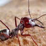 Life Lessons From Tiny Ants